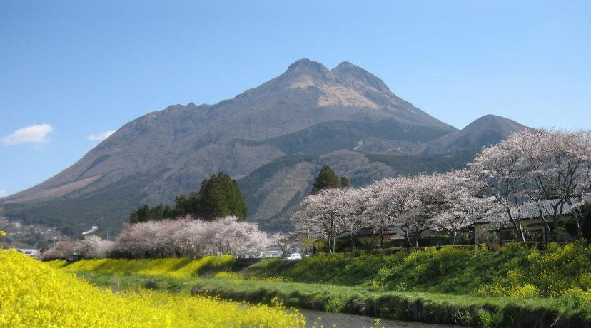 春の由布岳